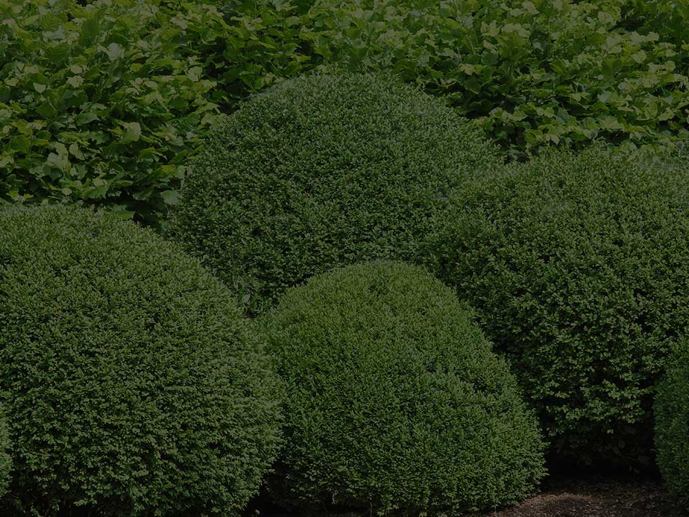 Point Washington Shrubs and Hedges