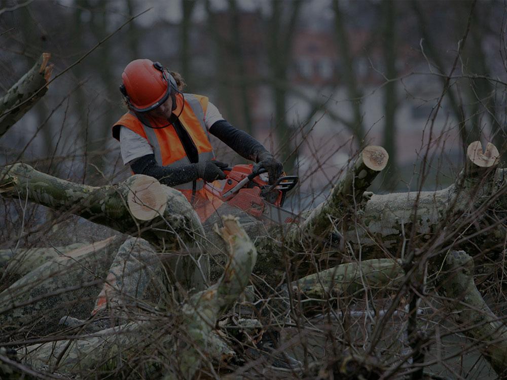 Point Washington Tree Removal