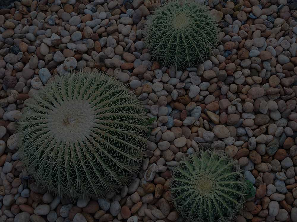 Point Washington Xeriscaping